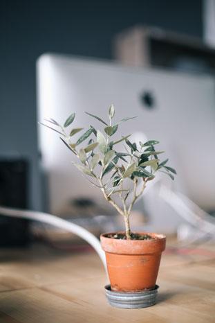 internship-growth-talent
